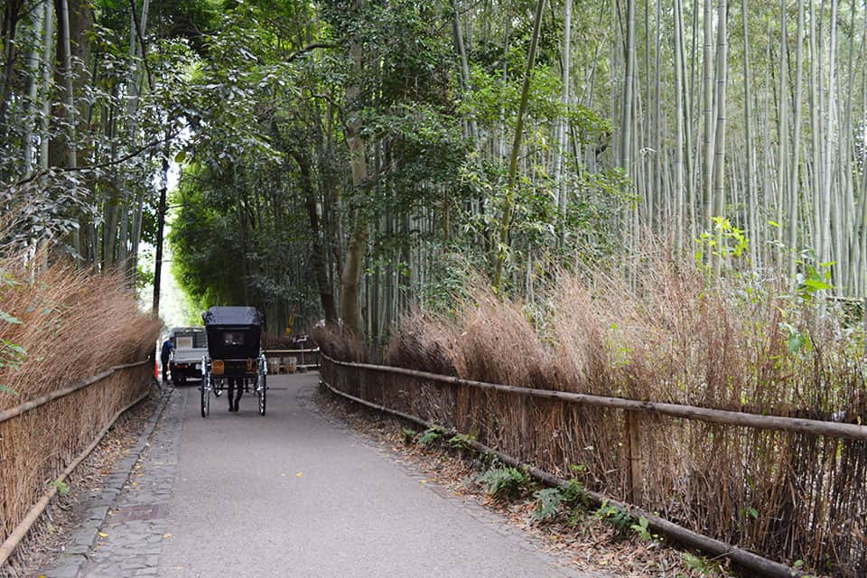 things to do in kyoto Arashiyama bamboo forest Kyoto