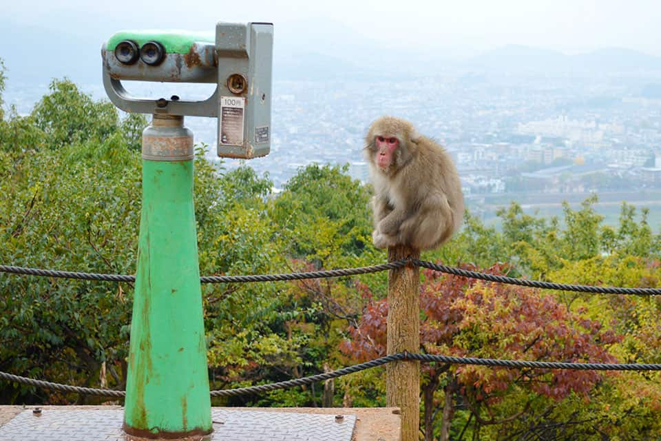 See the monkeys at Arashiyama Monkey Park Iwatayama