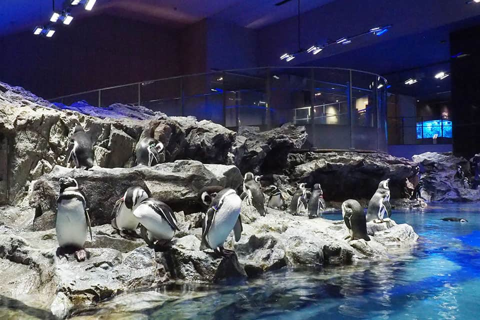 Penguins and jellyfish at Sumida aquarium Skytree Tokyo