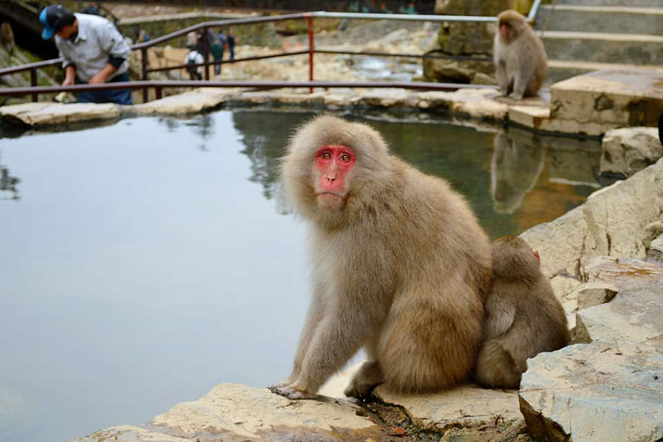 Day trip to the Snow Monkeys from Tokyo