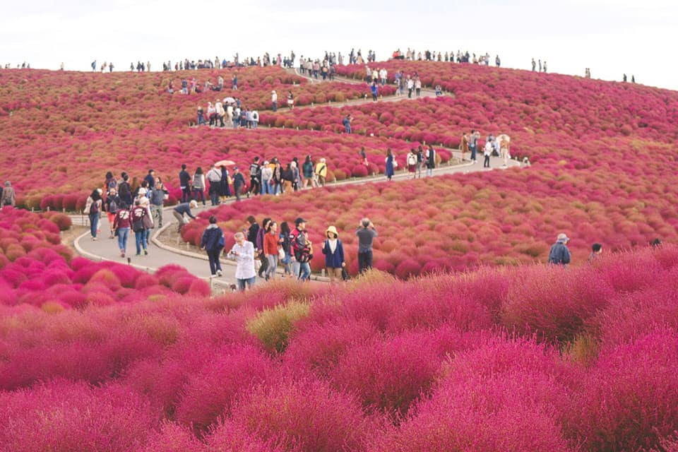 Day trip from Tokyo to Hitachi Seaside Park